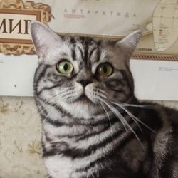 Кошка ПЛЮША - фото 8220