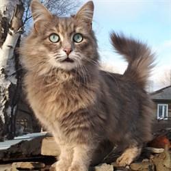 Кошка СИМА - фото 8228