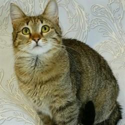Кошка ДАШКА - фото 8289