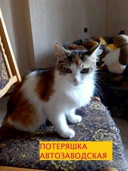 Кошка ЛИЗА - фото 8323