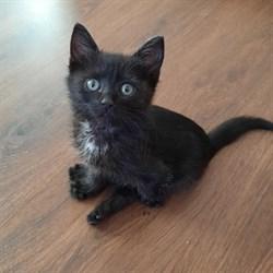 Кошка ИРИНА - фото 8335