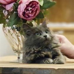 Кошка ЛАВАНДА - фото 8372