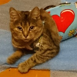 Кошка КИСУНЯ - фото 8374