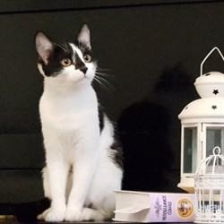 Кошка ВИОЛЕТТА - фото 8530