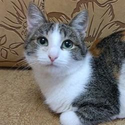 Кошка ИППОЧКА - фото 8586