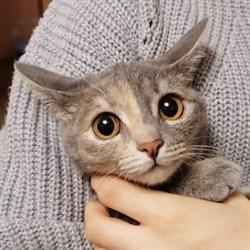 Кошка СИМКА - фото 8615