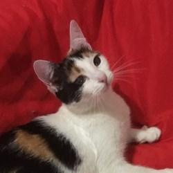 Кошка  МАШУНЯ - фото 8739