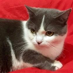 Кошка ЛОЛА - фото 8741