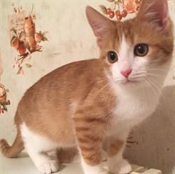 Кошка ЯСЯ - фото 8764