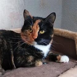 Кошка КАССАНДРА - фото 8765