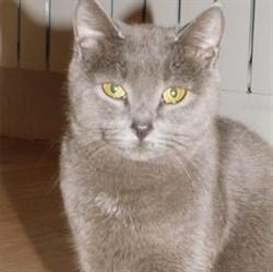 Кошка ШЕБА - фото 8778