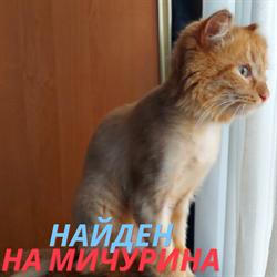Кот на Мичурина - фото 8865