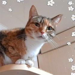 Кошка АСЯ - фото 9069