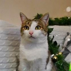 Кошка МАРУСЯ - фото 9084