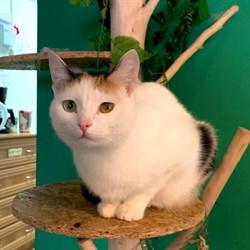 Кошка НЮША - фото 9087