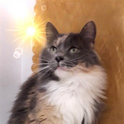 Кошка НЮША - фото 9158