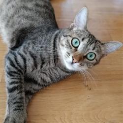 Кошка МАША - фото 9329