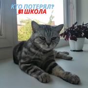 Кошка у 61 школы