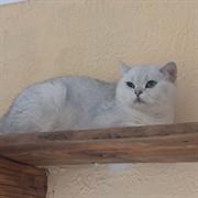 Кошка МАДМУАЗЕЛЬ