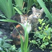 Кошка ТИГРУЛЯ
