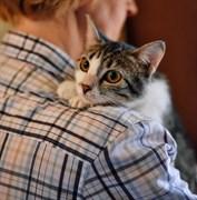 Кошка БЭЛЛА