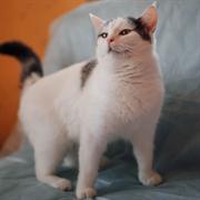Кошка БОНЯ