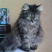 Кошка ДИНА
