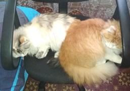 Кошки на Энгельса-Матросова