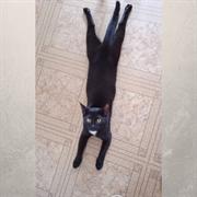 Кошка СИМОНА