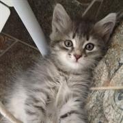 Кошка ДЕВОЧКА