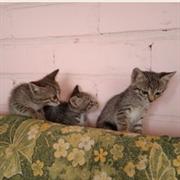 Кошка КОШЕЧКА
