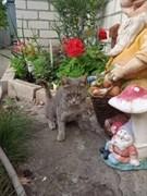 Кошка МАМОЧКА