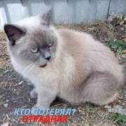 Кот на Отрадной