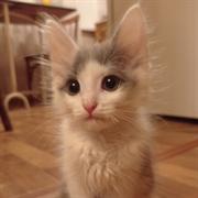 Кошка ТИНА