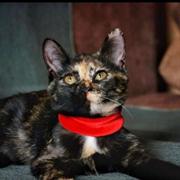 Кошка ЮТА