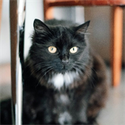 Кошка МАДЛЕН
