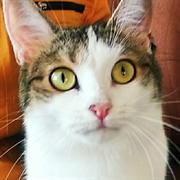 Кошка АЛИКА