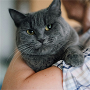 Кошка ФОРТУНА