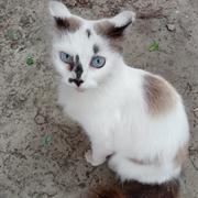 Кошка ВИШЕНКА