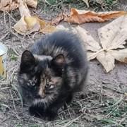 Кошка ВАЛЯ