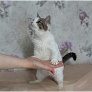Кошка МАРУСЕНЬКА
