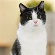 Кошка ДЖЕССИ