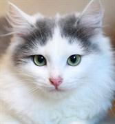Кошка МАРИССА