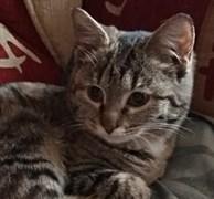 Кошка МАЗУТКА