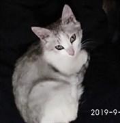 Кошка Луша  - Центр