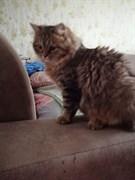 Кот на Филатова