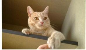 Кошка Буся  - Новосондецкий