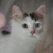 Кошка МАНТИ