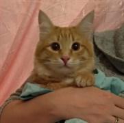 Кот с Телецентра