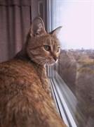 Кошка МУРКА - Станкостроителей